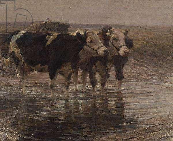 Cattle watering