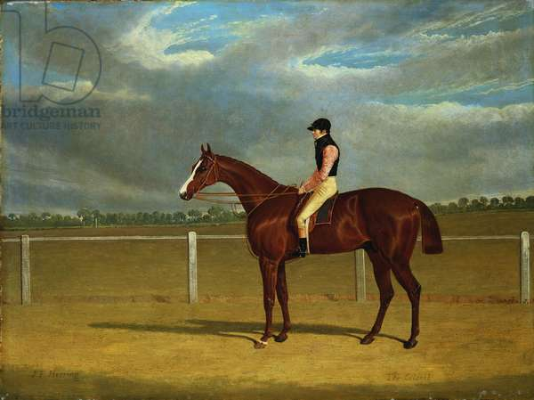 The Racehorse 'The Colonel' with William Scott Up (oil on canvas)