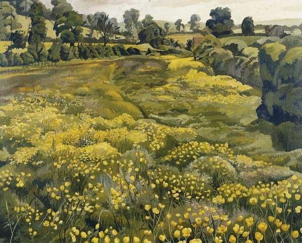 Buttercups in a Meadow, (oil on canvas)