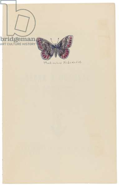 Butterfly drawing, in Vesna v Fial'te i drugie rasskazy. [Spring in Fialta and Other Stories.], 1956 (print)