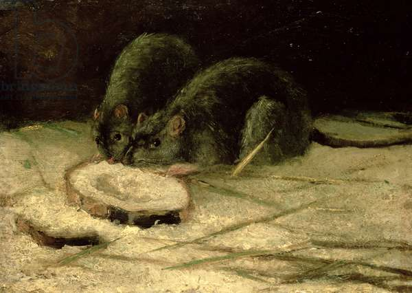 Two Rats, c.1884 (oil on panel)