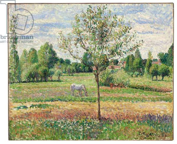 Meadow with Grey Horse, Eragny, 1893 (oil on canvas)