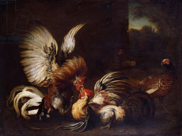 Cocks Fighting in a Farmyard