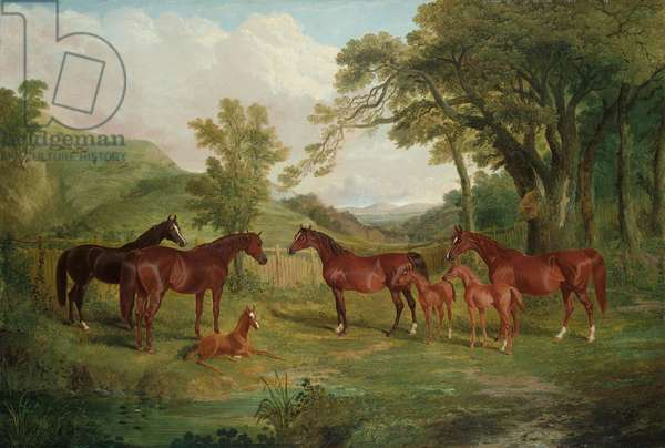 The Streatlam Stud, Mares and Foals, 1836 (oil on canvas)