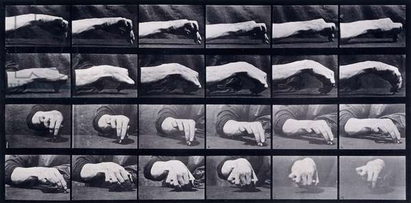 A Motion Study of a Hand, c.1872-1885 (collotype plate)