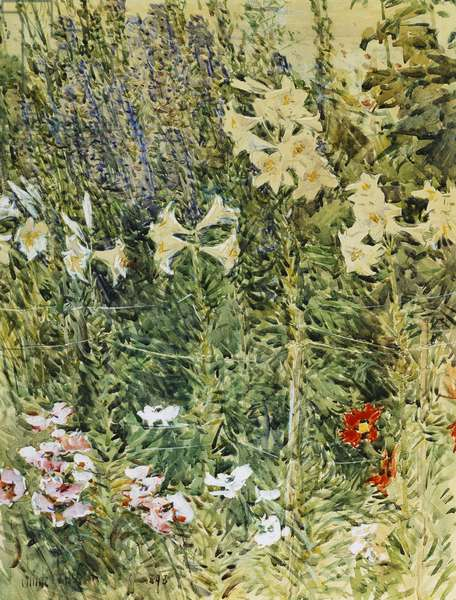 Larkspurs and Lillies, 1893 (watercolour and gouache on paper)