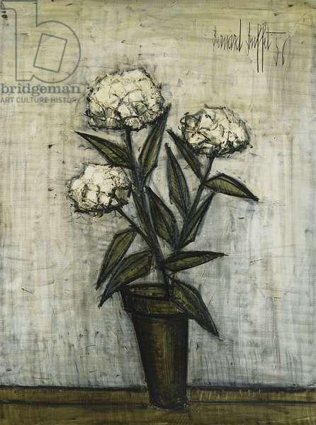 White Hydrangeas; Hortensias Blancs, 1956 (oil on canvas)