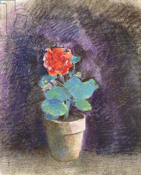 Geranium,  (pastel on paper mounted at the edges on board)