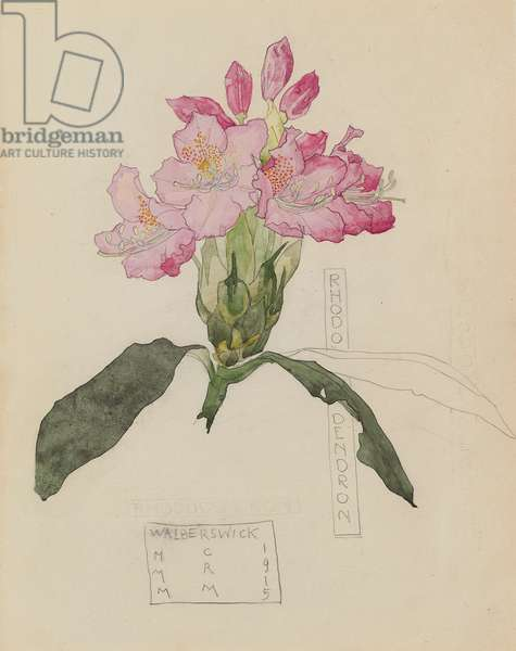 Study of a Rhododendron, 1915 (pencil and w/c on paper)