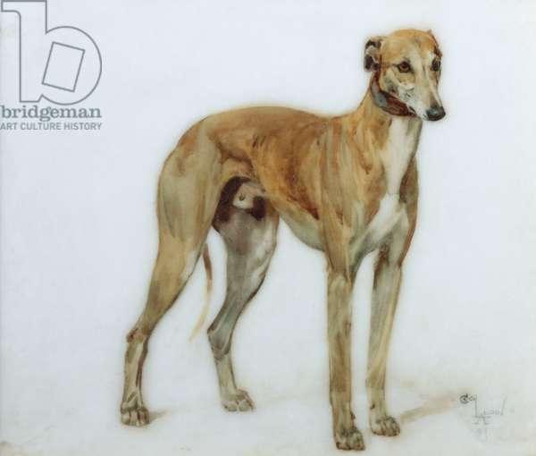 A Fawn Greyhound, 1897 (oil on porcelain)