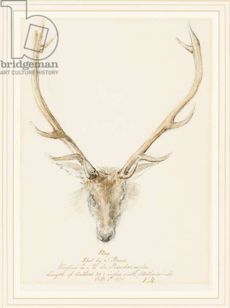 A stag shot by John Brown, 1874 (pencil & w/c heightened with touches of white on paper)