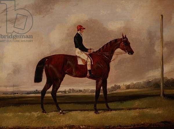 Bay Racehorse with a Jockey on a Racecourse