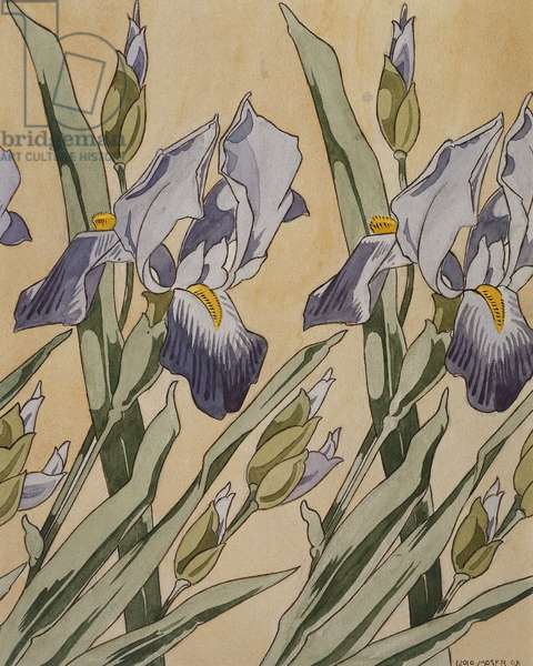 Iris, 1898 (watercolour on paper)