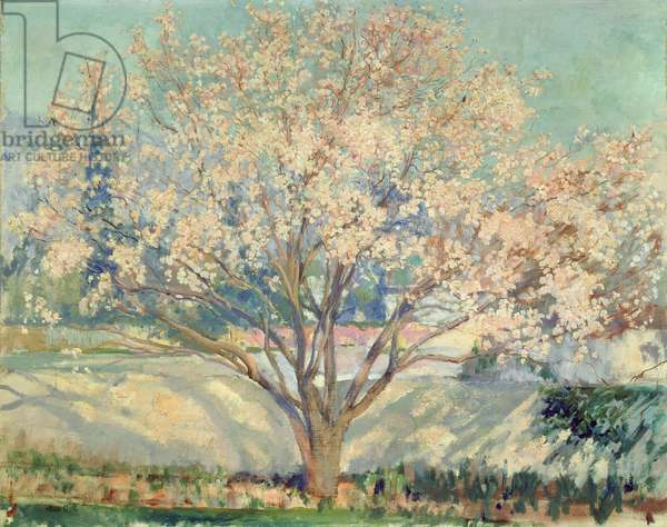 Almond Tree in Blossom (oil on canvas)