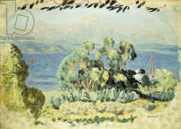 Les Eucalyptus, 1911 (oil on canvas)