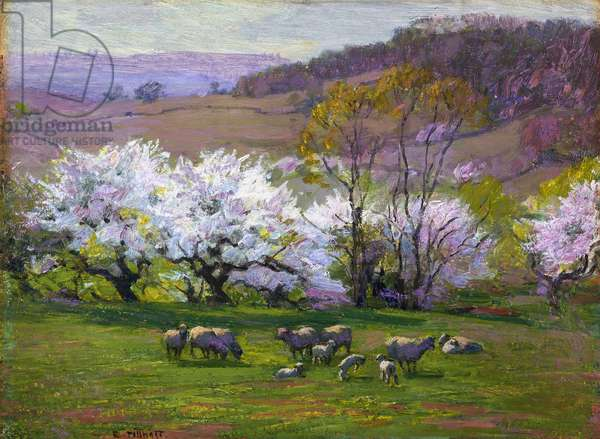 Blossom Time, (oil on panel)