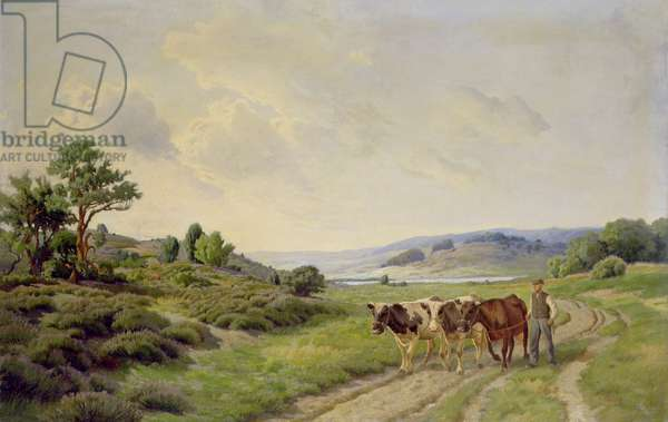 Extensive Danish Landscape with Cattle