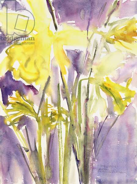 Daffodils, 2004 (watercolour)