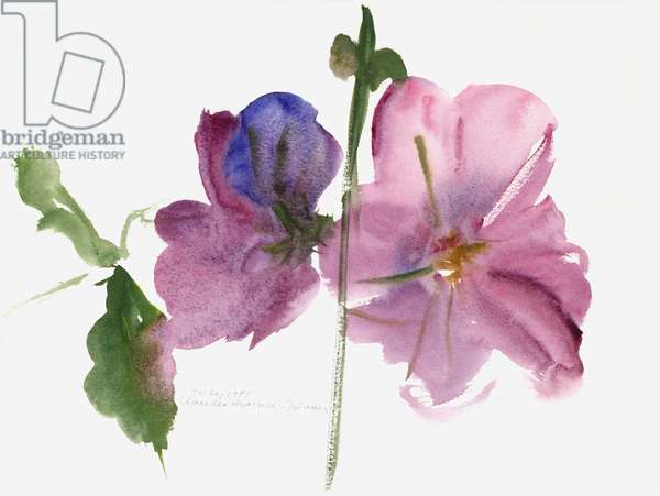 Hollyhocks, 1988 (watercolour)