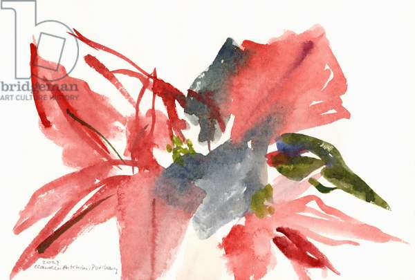 Poinsettia, 2003 (w/c on paper)