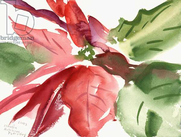 Poinsettia, 2003 (watercolour)