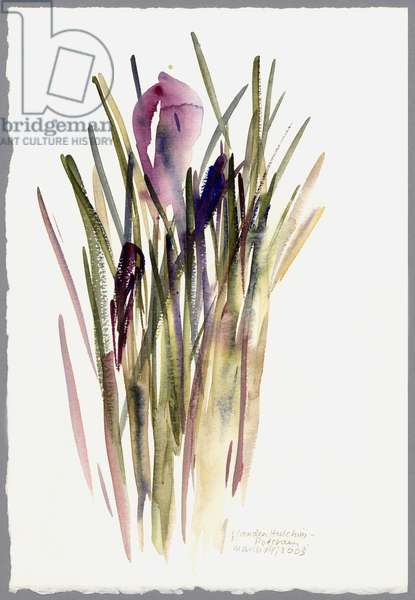 Crocus, 2003 (watercolour)
