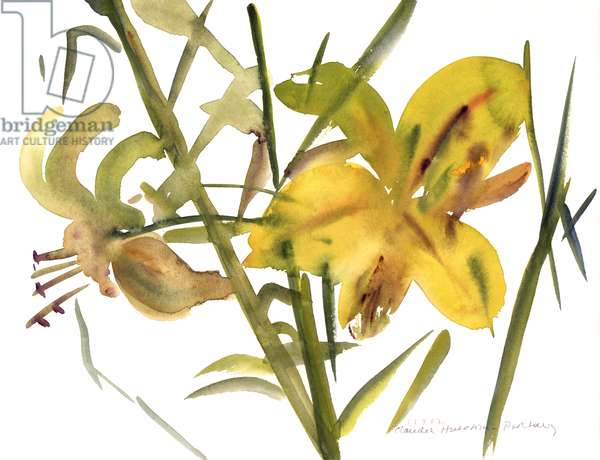 Lilies, 1987 (w/c on paper)