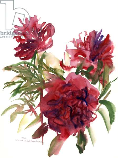 Peonies, 2002 (watercolour)