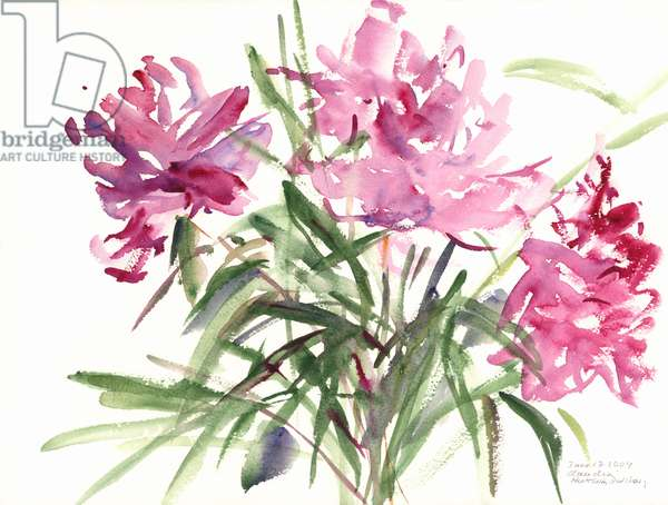 Peonies, 2004 (watercolour)