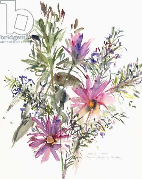 Floral, South African daisies and lavander, 2004 (watercolour)