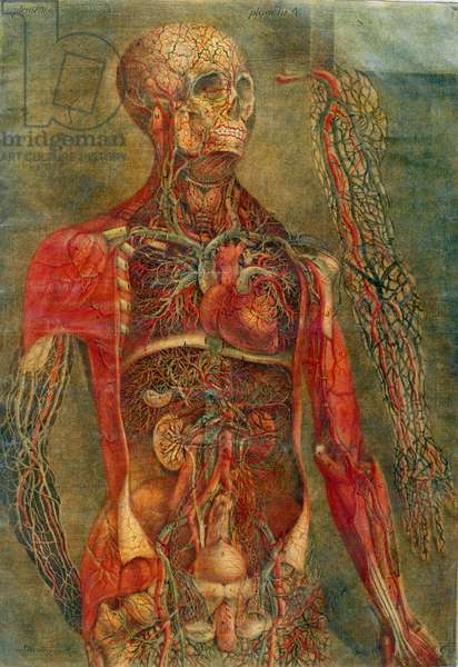 Internal organs of the body, plate from 'Anatomy of the Visceras' dissected, painted and engraved by Gautier, 1745 (colour engraving)