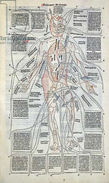 Surgical diagram of the anatomy of man, from 'Fasciculus Medicinae' by Johannes de Ketham (d.c.1490) 1491 (woodcut)