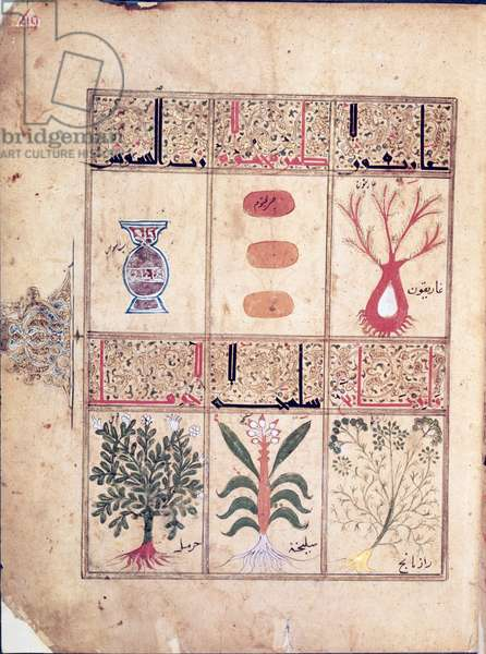 Ms. Arabe 2964 fol.49 Plants from the 'Treatise of Theriac' after Galien, 1217 (vellum)