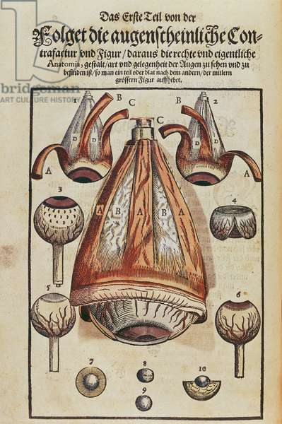 Anatomy of the eye, from 'Ophthalmodouleia' by Georg Bartisch (1535-1636) published in Dresden in 1583 (colour woodblock print) (see also 236712)