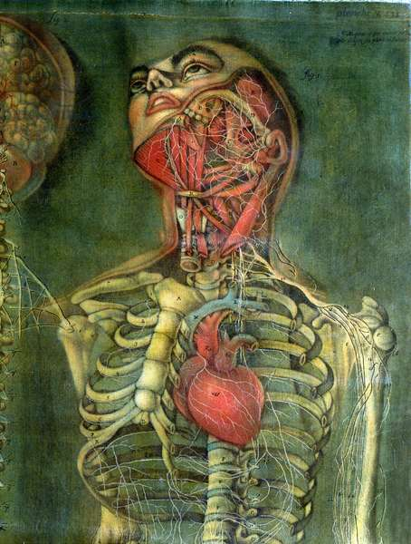 Throat and heart, plate from 'Anatomy of the Visceras', dissected, painted and engraved by Gautier, 1745 (colour engraving)
