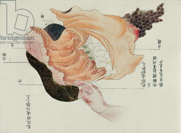 The stomach and intestines from the dissection of a torture victim of 1796, from a makimono of a Midori doctor, 1842 (pen & ink and w/c on paper)