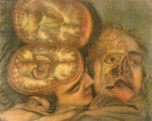 Cross-section of the Brain, 1746 (coloured engraving)