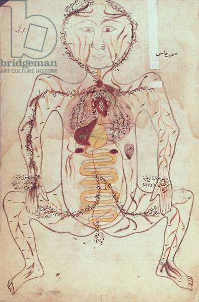 Ms Persan 1555 Anatomical diagram of the human circulatory and digestive system, c.1425-50 (vellum)