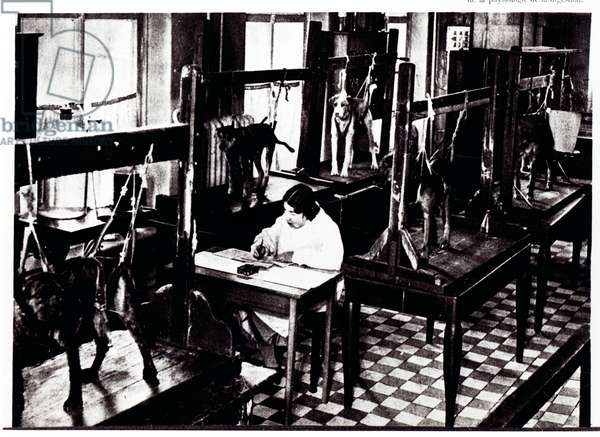 Experiments on dogs, at the Digestion Physiology Department in the Pavlov Institute, from 'L'URSS en construction', June 1934 (b/w photo)