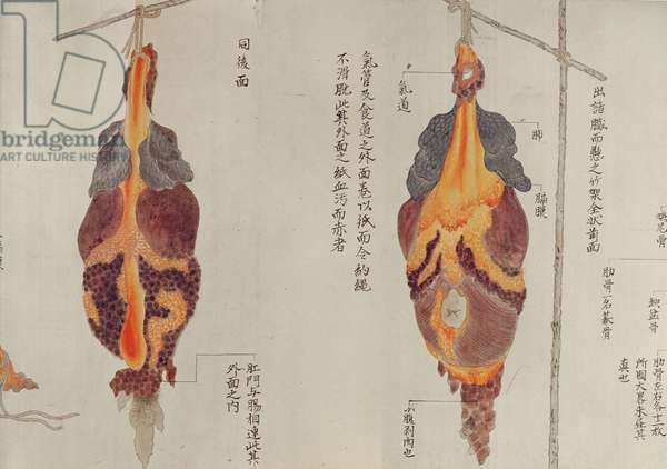 The lungs from the dissection of a torture victim of 1796, from a makimono of a Midori doctor, 1842 (pen & ink and w/c on paper)