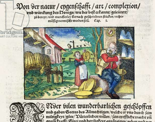 The healing and therapeutic uses of honey in Medicine, illustration from a German treatise on medicines published in Strasbourg in 1573 (coloured woodcut)