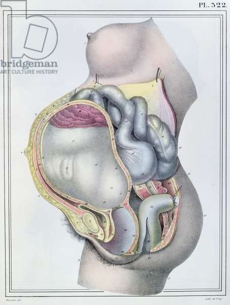 Anatomy of a pregnant woman, from 'Manuel d'Anatomie descriptive du Corps Humain' by Jules Cloquet (1790-1883) engraved by G. de Frey, 1825 (colour litho)