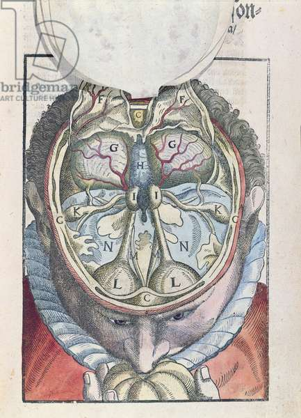 The Brain, from 'Ophthalmodouleia' by Georg Bartisch (1535-1636) published in Dresden in 1583 (coloured woodblock print)
