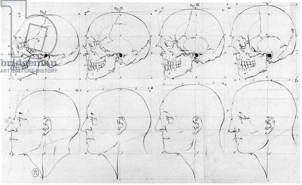 Transition from the monkey to Apollo, illustration from 'Dissertation sur les varietes naturelles qui caracterisent la physionomie', chez H. Jansen, Paris, published 1791 (engraving) (b/w photo)
