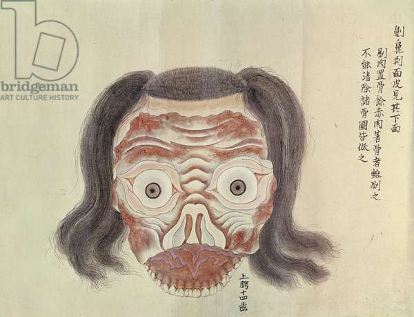 The anatomy of the face from the dissection of a torture victim of 1796, from a makimono of a Midori doctor, 1842 (pen & ink and w/c on paper)