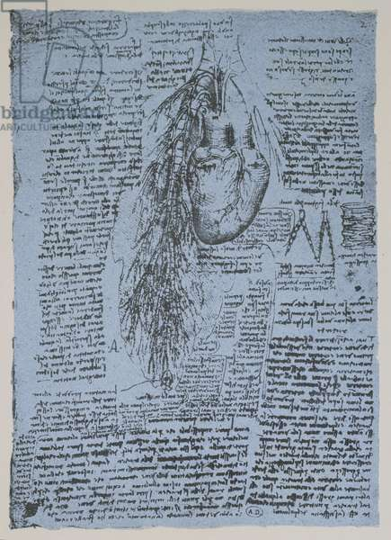 The Heart and the bronchial arteries, facsimile of the Windsor book (pen and ink on paper)