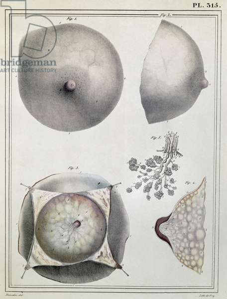 Anatomy of the breast, from 'Manuel d'Anatomie descriptive du Corps Humain' by Jules Cloquet (1790-1883) engraved by G. de Frey, 1825 (colour litho)