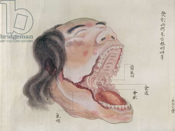 The anatomy of the mouth, from the dissection of a torture victim of 1796, from a makimono of a Midori doctor, 1842 (pen & ink and w/c on paper)