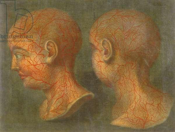 Superficial blood vessels of the head and neck, from 'Anatomie de la Tete', 1748 (mezzotint)