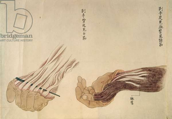 The anatomy of the hand, from the dissection of a torture victim of 1796, from a makimono of a Midori doctor, 1842 (pen & ink and w/c on paper)